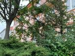 Prenájom pekný v centre 2 izbový byt ulica 1.mája, zariadený, balkón, Malacky