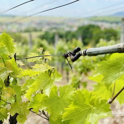 Predaj záhrada, vinohrad, viničný domček, Veľký Lapáš