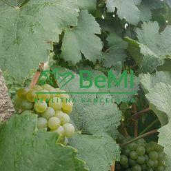 Vinica v čistej prírode (042-14-DAR)