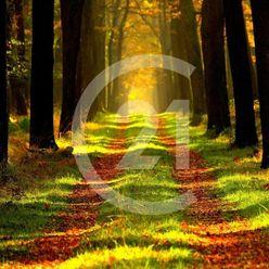Predaj neštátnych lesov