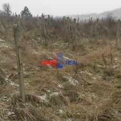 Neobrábaný vinohrad v Modre lokalita Noviny smer Šenkvice - 4000 m2,