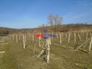 Obrábaný vinohrad lokalita Zajačie nad Limbachom - 23 árov