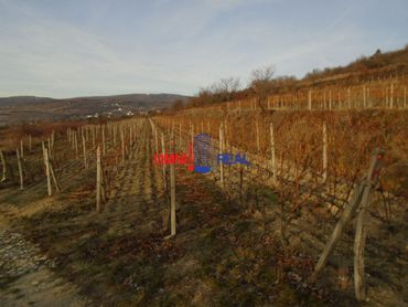 Hľadám vinohrad v Limbachu, aj neobrábaný