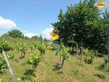 JKV REAL | Predaj Ponúkame na predaj viničný dom- Chata, Mýtne Ludany